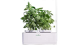Odyseed - indoor vegetable garden - 100% organic - grow you aromatic herbs indoors - basil, cinnamon and lemon included