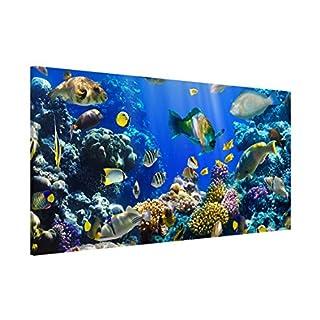 Apalis 108856 Magnettafel Underwater Reef Memoboard Design Quer Metall Magnet Pinnwand Motiv Wand Stahl Küche Büro, 37 x 78 cm