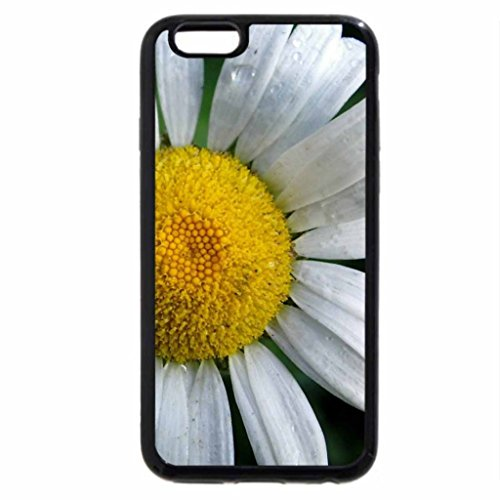iPhone 6S / iPhone 6 Case (Black) The Oxeye Daisy