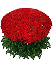 Floralbay Red Roses Bouquet Fresh Flowers in Cellophane Wrapping