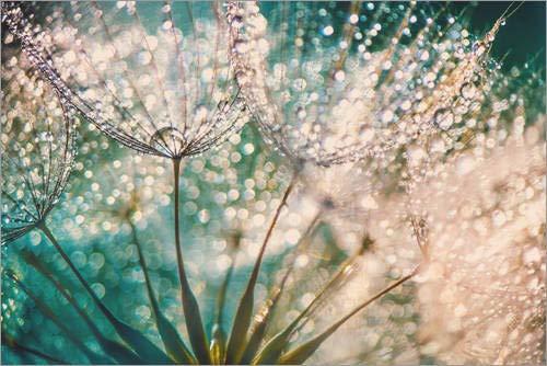 Acrylglasbild 60 x 40 cm: Pusteblume Tropfentraum von Julia Delgado - Wandbild, Acryl Glasbild, Druck auf Acryl Glas Bild