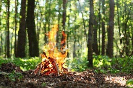 """Poster-Bild 140 x 90 cm: """"Bonfire in the forest """", Bild auf Poster"""