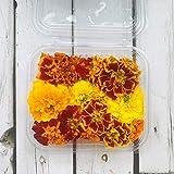 Fiori Commestibili BIOLOGICI - 35 TAGETE di colore ARANCIONE e GIALLO in vaschetta alimentare di 16 cm x 13 cm x 1,5 cm - Coltivati in Toscana dall'azienda agricola Carmazzi