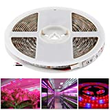 HITSAN INCORPORATION 300 LED SMD 5050 4:1 Red and Blue Aquarium Greenhouse Hydroponic