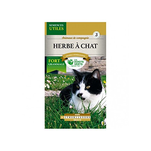 semence-herbe-a-chat