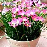 Semi 50pcs A Lot zephyranthes candida (cipolla Orchid lampadina) Mini Facile Piantare balcone divertimento al coperto vasi da fiori Seed