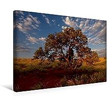 Calvendo Premium Textil-Leinwand 45 cm x 30 cm Quer, Namib Rand Nature Reserve | Wandbild, Bild auf Keilrahmen, Fertigbild auf Echter Leinwand, Leinwanddruck Orte Orte