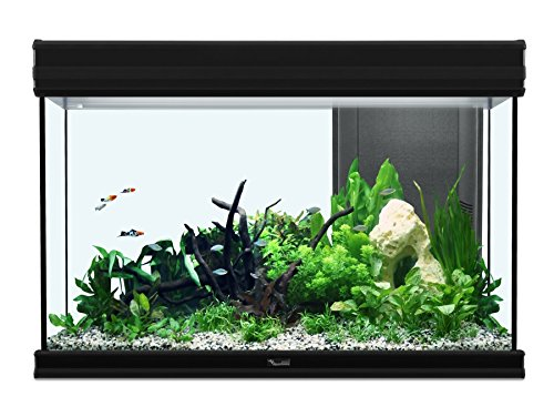 Quelle taille d'aquarium choisir quand on est débutant ?