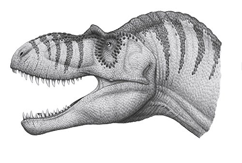 Heraldo Mussolini/Stocktrek Images – Headshot of an Albertosaurus sarcophagus dinosaur. Photo Print (86,87 x 58,42 cm)