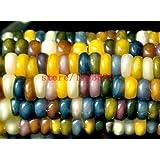 semillas de maíz auténtico cristal joya semillas de maíz indio! Herencia, semillas de hortalizas del arco iris, no modificados genéticamente para la plantación de jardín de casa
