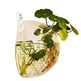 Tovaglietta in materiale acrilico trasparente, 10 cm, con Mini supporto da parete, motivo: acquario-Vaso per piante, decorazione per la casa