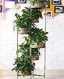 ZENGAI Indoor-Blumen-Racks Multi-Layer-Eisen-Blumentopf-Rack Home Blumenladen Balkon Kreatives Retro weißes Blumenregal (Farbe : Gold, größe : H/126cm)