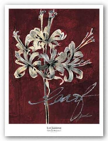 Cabernet Blossoms I by Liz Jardine Art Print Poster