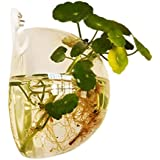Jungen 10cm transparente Mini acrílico redonda soporte de pared pecera tanque Flores Plantas Jarrón Decoración del hogar