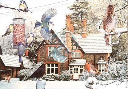 1000-piece-jigsaw-puzzle-birds-eye-view-in-winter-garden