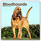 Bloodhounds - Bluthunde 2019 - 18-Monatskalender mit freier DogDays-App (Wall-Kalender)