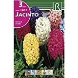 Bulbos de jacinto variado (bolsa 3 bulbos)