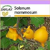 SAFLAX - Albero dei capezzoli - 10 semi - Solanum mammosum