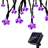 Tuokay 7M 50 LED Luci Natalizie da Esterno Formato di Fiore Luci Decorazioni Natale Catene Luminose Solare per Giardino Patio Albero di Natale (Viola)