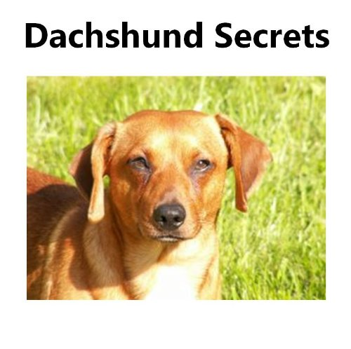 Dachshund Secrets: How to Raise Happy and Healthy Dachshunds