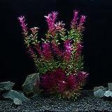 owikar Aquarium Pflanzen Künstliche Kunststoff Aquarium Pflanzen Rot Farbverlauf Farbe Fisch Tank Dekorationen Landschaft lebensechte Wasser Pflanzen Abnehmbare Blätter