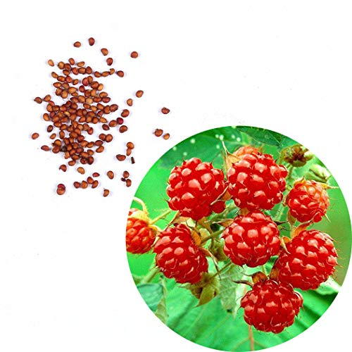 Edited Walderdbeere Samen (wilde Erdbeere) ca. 50 Samen, aromatischer Geschmack, schnellwachsende Erdbeeren, Gastgeschenke, Geschenk für Frauen und Männer, Geburtstagsgeschenk für Männer