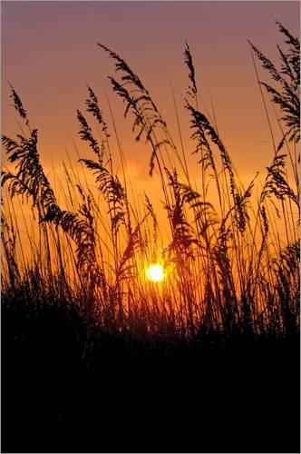 Stampa su acrilico 80 x 120 cm: Sea grass silhouetted at sunrise. di Brian Gordon Green / National Geographic