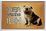 Hier wache ich ! Englische Bulldogge Hund 20 x 30 cm Türschild Blechschild 1417