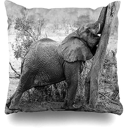 Funda de cojín Grande Verde Africano Joven Elefante húmedo Alcanzando Bush Rascando su África Africana Diseño de africana en el hogar Funda de almohada Tamaño cuadrado es Decoración con cremallera Funda de almohada 45X45CM