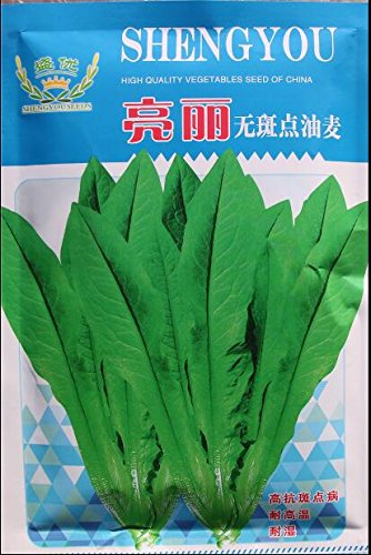 100 grammes / emballage d'origine quatre saisons graines de laitue semences de légumes bonsaï bricolage jardin maison livraison gratuite