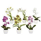 DPI Orchidee aus Kunststoff im weißen Topf, 18cm, bunt sortiert (6er-Set)