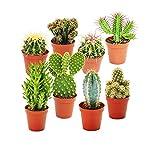 exotenherz Pflanzen, Kakteen-Starter-Set - 8 verschiedene im 5,5 cm Topf, grün, 27 x 17.5 x 8 cm, 112508022017