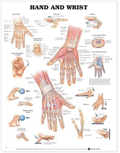 Hand and Wrist por Anatomical Chart Company