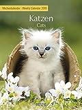 Wochenkalender Katzen - Kalender 2018 - Korsch-Verlag - Foto-Wochenkalender - 24 cm x 32 cm
