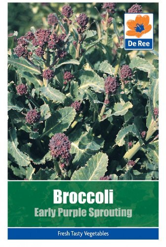 Sprouting Broccoli (Broccoli Early Purple Sprouting by Bulbs and Seeds Direct)