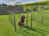 Welpenfreigehege YOUNG DOGS Größe L der Marke MYPETS Laufgitter Welpenauslauf Freigehege - 6