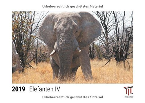 Elefanten IV 2019 - Timokrates Tischkalender, Bilderkalender, Fotokalender - DIN A5 (21...