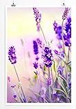 Eau Zone Home Bild - Naturbilder – Wunderschöner Lavendel- Poster Fotodruck in höchster Qualität