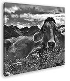 liegende Kuh auf der Weide Format: 70x70 Effekt: Schwarz&Weiß als Leinwandbild, Motiv auf Echtholzrahmen, Hochwertiger Digitaldruck mit Rahmen, Kein Poster oder Plakat