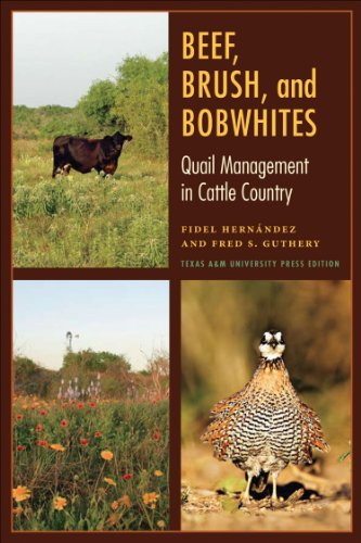 Beef, Brush, and Bobwhites (Perspectives on South Texas) (Wachtel Landwirtschaft)