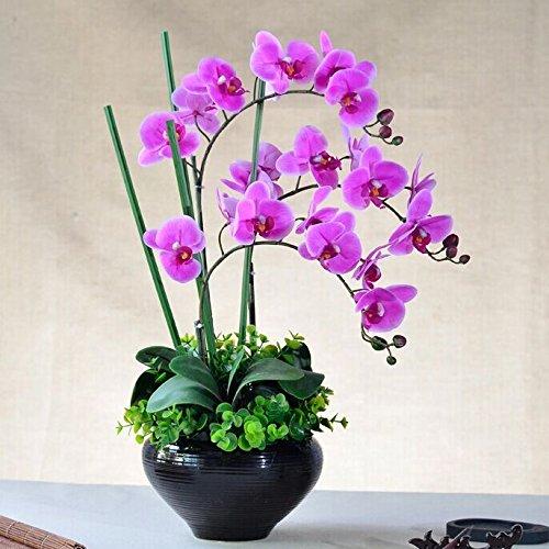 Beata.T Puthe Moth Orchid Fiori artificiali di emulazione di plastica di fiori di seta Fiori secchi Fiori decorazioni di fiori trascorrere cinese paesaggi in miniatura Home Decor,sogno viola, nero come cono di rotazione