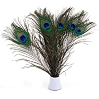 Plumas de pavo real naturales de 25 a 30 cm, ideal para decoración de bodas
