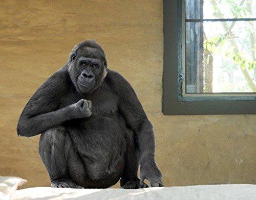 Wandtattoo No.163 Gorilla Chef Tier Wild Dschungel Affen Menschenaffen Tier