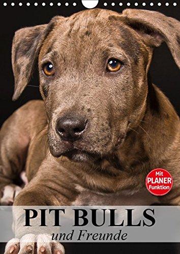 Pit Bulls und Freunde (Wandkalender 2019 DIN A4 hoch): Starke Hunde zwischen Wahrheit und Hetze. (Planer, 14 Seiten ) (CALVENDO Tiere) -