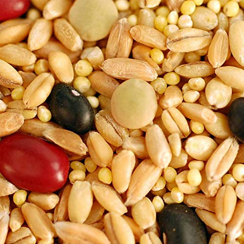 Antike Brot (FARMERLY ORGANISCHE SÄTZE: 5 LB Puede: BIBLIC Pan Grano Mix - ORGÃNICA - F, Aufbewahrung von Lebensmitteln - Antik TESTAMENTO Recipie)
