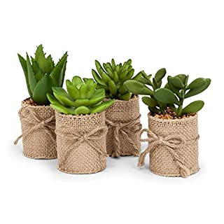 Abbott Collection Set of 4 Green Succulents in Burlap WRAP, Brown