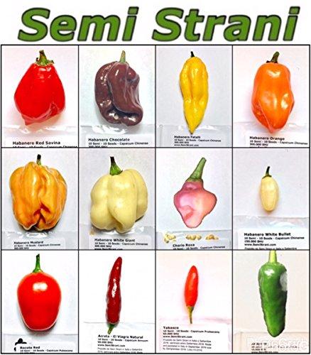 120-graines-de-les-piment-chili-plus-populaire-au-mexique-collection-mexicaine-habanero-red-savina-h