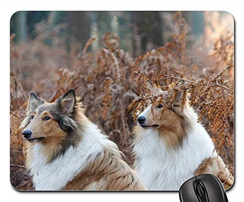Gaming-Mauspads, Mauspad, Collie Dogs Pair Aufmerksamkeit Wald Tier Portrait