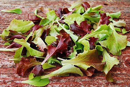 Fash Lady 2000 Bio Mesclun Mix Samen, alle Salat, Gourmet-Salat-Mix