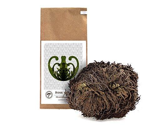 Yakeba | Rose von Jericho | Selaginella lepidophylla | Groß | Papiertüte
